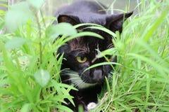 Le chat noir et blanc se repose parmi l'herbe verte avec seulement et le foyer choisi Images stock