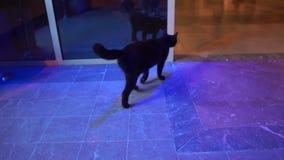 Le chat noir la nuit a présenté le lobby d'hôtel dans le mouvement lent banque de vidéos