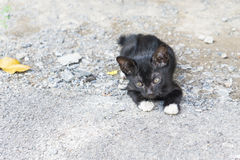 Le chat noir paresseux s'étendent sur le plancher extérieur en béton sous la lumière du soleil Image stock