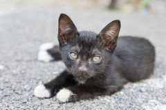 Le chat noir paresseux s'étendent sur le plancher extérieur en béton sous la lumière du soleil Images stock
