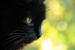 Le chat noir sur un fond jaune Photo libre de droits