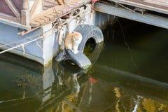 Le chat observe l'eau Photographie stock libre de droits