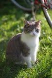 Le chat observe le chaton (кР'Ð de Ð?Ð'Ð¸Ñ de  Ñ ÑˆÐºÐ° ¾ Р»·¼ DU ¾ Ð DU ½ кРDU 'Ð?Ð DU ¾ Ñ DE а кÐ) Photographie stock