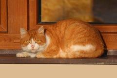 Le chat orange sur la fenêtre détendent dans le coucher du soleil Image stock