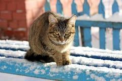 Le chat pendant l'hiver sur le banc Photographie stock