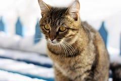 Le chat pendant l'hiver sur le banc Photos libres de droits