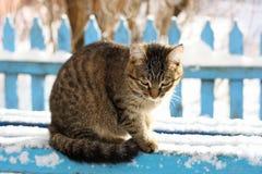 Le chat pendant l'hiver sur le banc Images stock