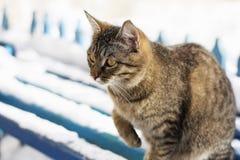 Le chat pendant l'hiver sur le banc Photo stock