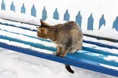Le chat pendant l'hiver sur le banc Photographie stock libre de droits