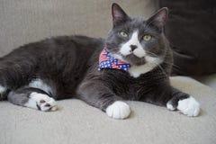 Le chat polydactyl patriotique a les orteils supplémentaires photographie stock