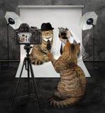 Le chat prend une photo 2 photos stock