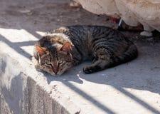 Le chat rayé gris dans le matin se situe et se dore en soleil Photographie stock