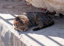 Le chat rayé gris dans le matin se situe et se dore en soleil Photographie stock libre de droits