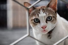 Le chat a regardé fixement avec le soupçon et le regard par la barrière de maison, foyer sélectif photo libre de droits