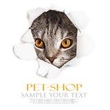 Le chat regarde par un trou en papier photos stock