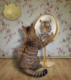 Le chat regarde un tigre dans le miroir image stock