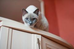 Le chat regarde vers le bas Photographie stock libre de droits