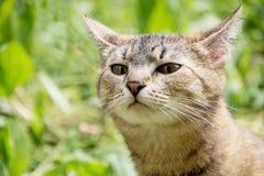 Le chat renifle l'air à la recherche de la proie Image libre de droits