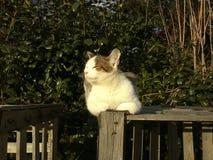 Le chat renifle sur une structure en bois, le fond est un mur de buisson photographie stock