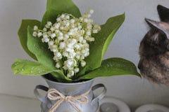 Le chat renifle un beau bouquet des lis de la vallée dans un vase à vintage images libres de droits