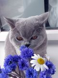 Le chat renifle un bouquet des fleurs photo stock