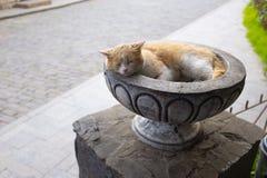 Le chat rouge dort dans un vase en pierre gris image stock