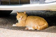 Le chat rouge est caché de la chaleur sous le pare-chocs du car_ photo libre de droits