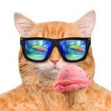 Le chat rouge mange la crème glacée  Photos stock