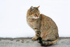Le chat rouge observe Les copies ont mouillé des pattes Photo stock