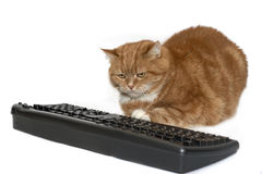 Le chat rouge se repose près du clavier photos stock
