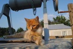 Le chat rouge se repose sur le puits Image stock