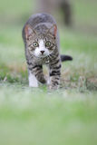 Le chat runing Photo stock