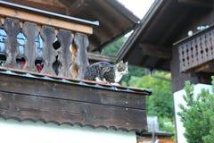 Le chat rural effronté se reposant sur le dessus de toit image libre de droits