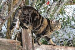 le chat s'élève abilement sur une barrière Image stock