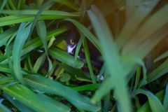 Le chat s'est caché dans l'herbe verte dans le pré images stock