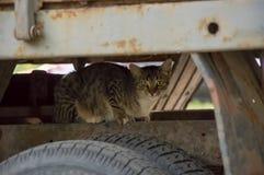 Le chat s'est caché sous le capot de la voiture image libre de droits