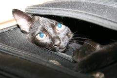Le chat s'est emballé dans le sac de voyage Image libre de droits