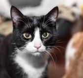 Le chat sans abri a besoin d'une maison de forever images libres de droits