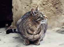 Le chat sans abri repose extérieur Photos libres de droits