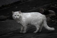 Le chat sans abri sale a besoin d'une aide photographie stock
