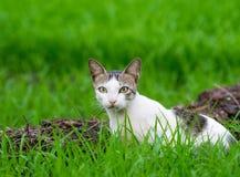 Le chat sauvage dans l'herbe a couvert le champ image stock
