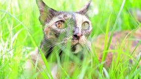 Le chat se couchent sur l'herbe dans le jardin banque de vidéos