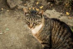 Le chat se reposant sur la route Photographie stock