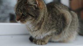 Le chat se reposant sur un rebord de fenêtre clips vidéos