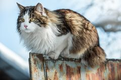 Le chat se reposant sur une barrière Images libres de droits