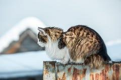 Le chat se reposant sur une barrière Photos stock