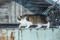 Le chat se reposant sur une barrière Photo libre de droits