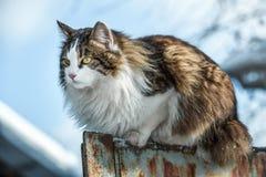 Le chat se reposant sur une barrière Photographie stock libre de droits