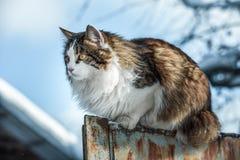 Le chat se reposant sur une barrière Image stock