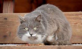 Le chat se repose Images libres de droits